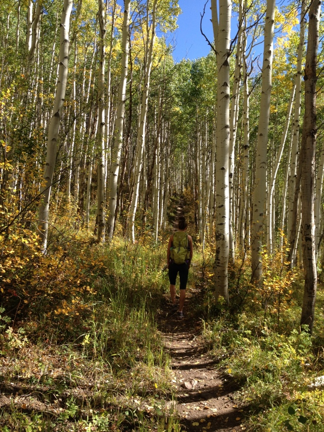 The aspens were amazing. I'd never seen them like this!