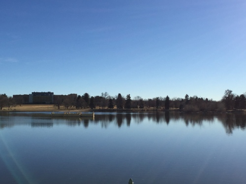 City Park really is a lovely spot to run, walk dogs, etc.  Worth wandering through on a nice Denver day.